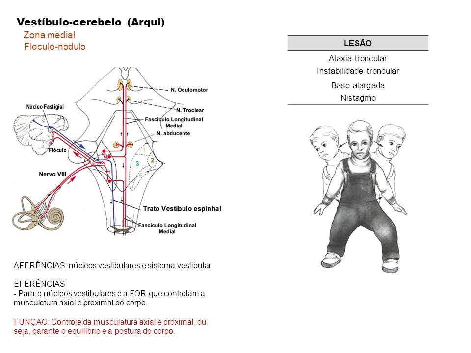 AFERÊNCIAS Trato espinocerebelares Anterior: co-ativado com o trato cortico-espinhal Posterior: receptores proprioceptivos -propriocepção e informação cutânea FUNÇÃO:influência os neurônios motores do grupo lateral, ou seja, a musculatura distal.