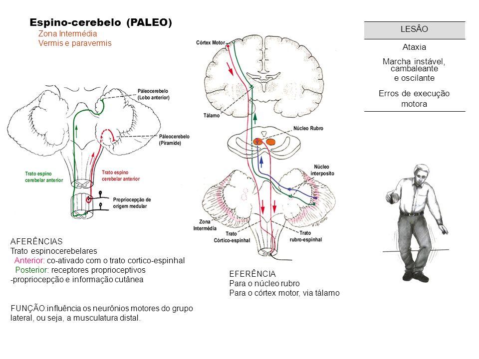 Zona Lateral Cérebro-cerebelo (NEO) AFERÊNCIAS Córtex frontal, parietal e occipital, via núcleos da ponte EFERENCIA Para o córtex motor, via tálamo FUNÇÃO: Controle do tônus muscular Programação do movimento voluntário Correção do movimento em execução Aprendizagem motora Idéia de movimento LESÂO ataxia (incoordenação motora da fala e das extremidades) dismetria (erros na força) decomposição motora, disdiadococinesia (dificuldade de realizar movimentos rápidos e alternados); rechaço (dificuldade de controlar voluntariamente os músculos extensores); tremor intencional Nistagmo patologico Qual seria topografia da lesão de uma ataxia cerebelar na mão direita?