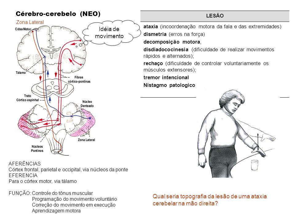 Zona Lateral Cérebro-cerebelo (NEO) AFERÊNCIAS Córtex frontal, parietal e occipital, via núcleos da ponte EFERENCIA Para o córtex motor, via tálamo FU