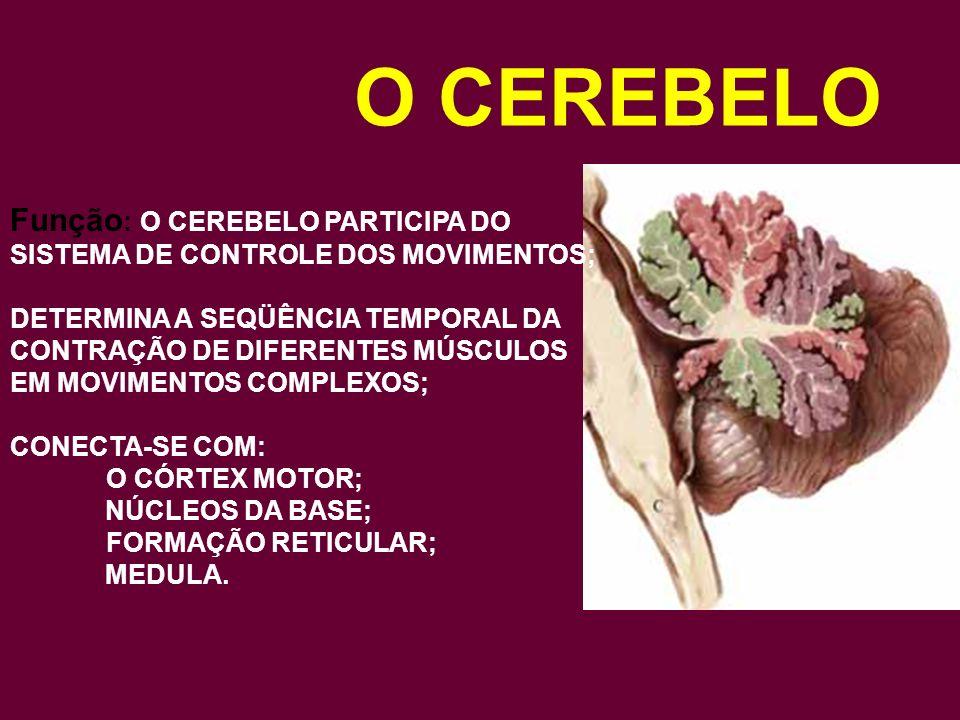 O CEREBELO Fisiologia: Funciona sempre em nível involuntário e inconsciente;