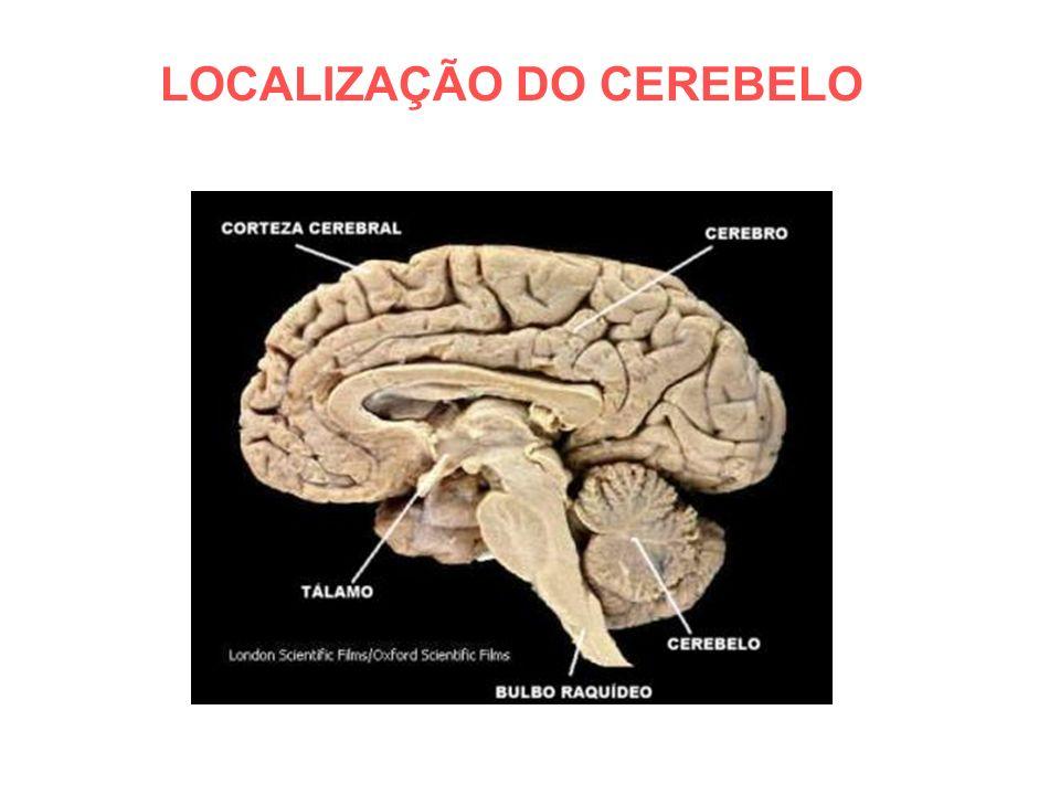 ANATOMIA MACROSCÓPICA DO CEREBELO VISÃO POSTERIOR (DORSAL) VERMIS FISSURA PRIMA LOBO ANTERIOR LOBO POSTERIOR HEMISFÉRIO CEREBELAR