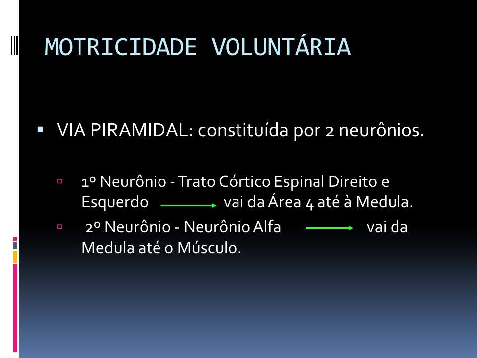 MOTRICIDADE VOLUNTÁRIA VIA PIRAMIDAL: constituída por 2 neurônios. 1º Neurônio - Trato Córtico Espinal Direito e Esquerdovai da Área 4 até à Medula. 2