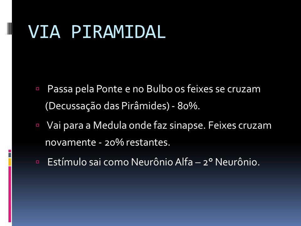 VIA PIRAMIDAL Passa pela Ponte e no Bulbo os feixes se cruzam (Decussação das Pirâmides) - 80%. Vai para a Medula onde faz sinapse. Feixes cruzam nova