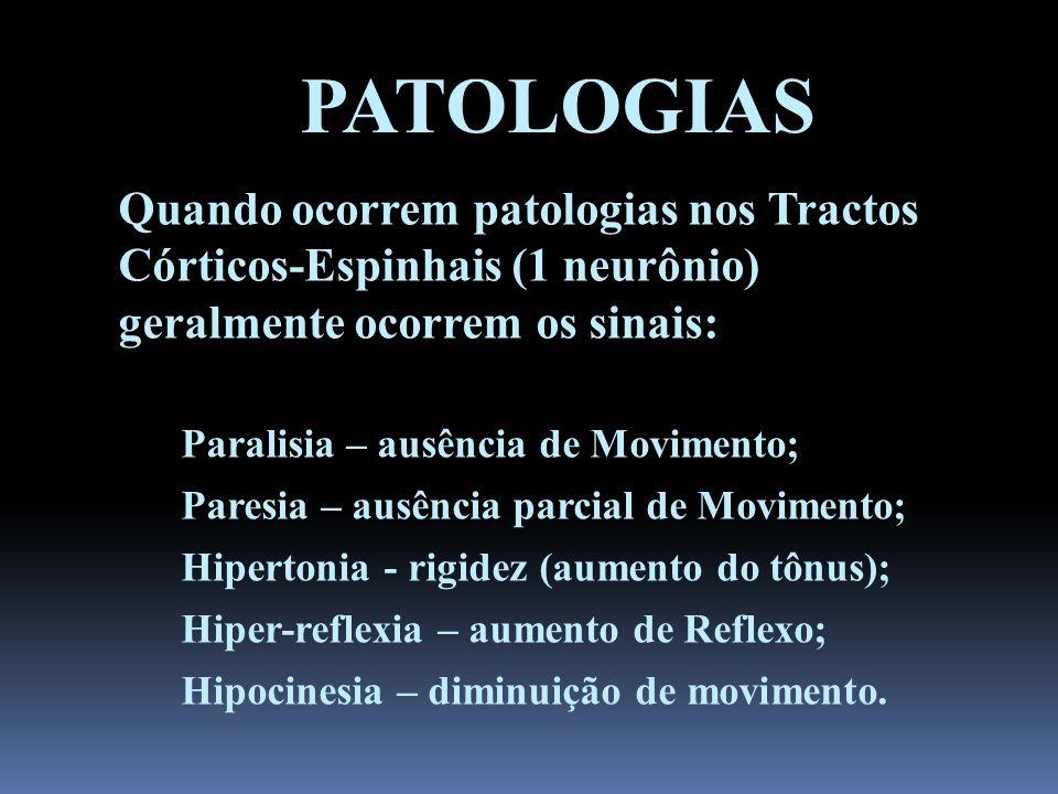 PATOLOGIAS Quando ocorrem patologias nos Tractos Córticos-Espinhais (1 neurônio) geralmente ocorrem os sinais: Paralisia – ausência de Movimento; Pare
