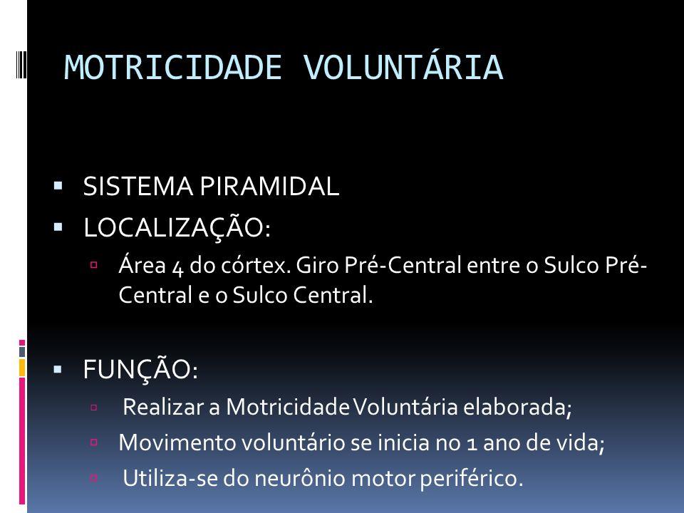 MOTRICIDADE VOLUNTÁRIA SISTEMA PIRAMIDAL LOCALIZAÇÃO: Área 4 do córtex. Giro Pré-Central entre o Sulco Pré- Central e o Sulco Central. FUNÇÃO: Realiza