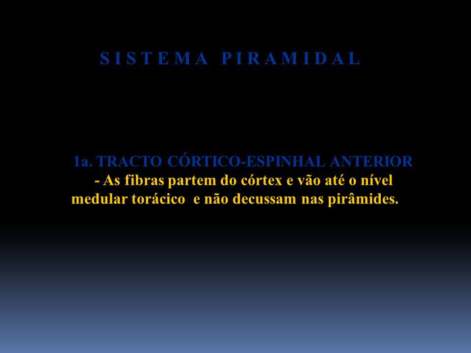 1a. TRACTO CÓRTICO-ESPINHAL ANTERIOR - As fibras partem do córtex e vão até o nível medular torácico e não decussam nas pirâmides. S I S T E M A P I R