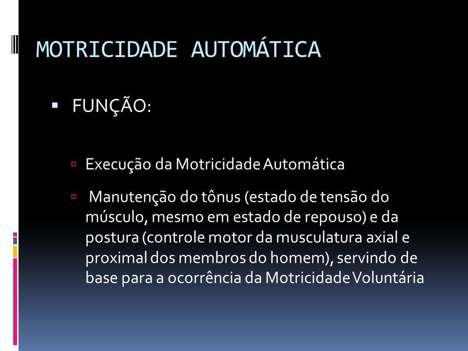 MOTRICIDADE AUTOMÁTICA FUNÇÃO: Execução da Motricidade Automática Manutenção do tônus (estado de tensão do músculo, mesmo em estado de repouso) e da p