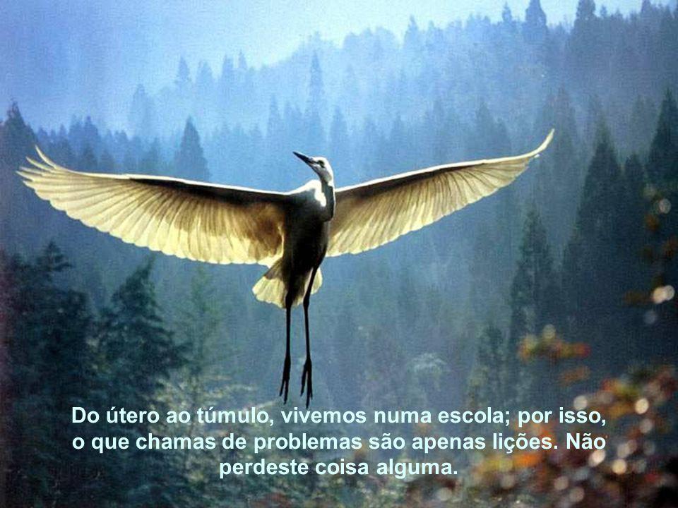 Além disso, a vida não te tira coisas: te liberta de coisas… alivia-te para que possas voar mais alto, para que alcances a plenitude.