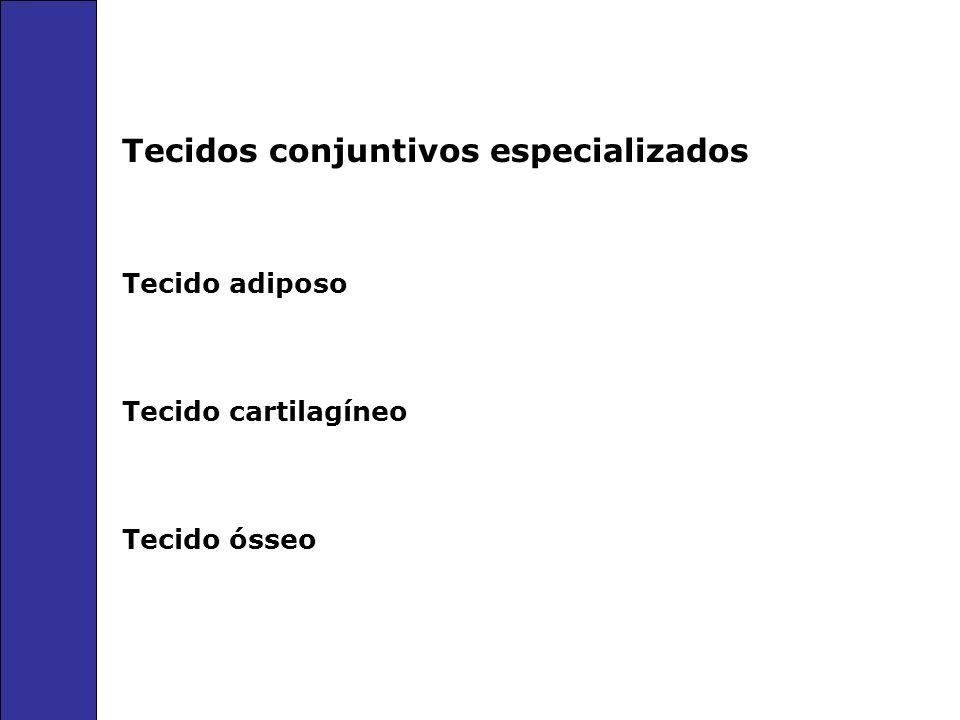 Tecidos conjuntivos especializados Tecido adiposo Tecido cartilagíneo Tecido ósseo
