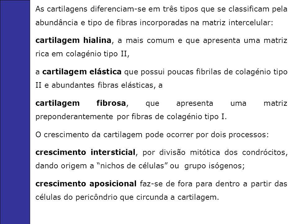 As cartilagens diferenciam-se em três tipos que se classificam pela abundância e tipo de fibras incorporadas na matriz intercelular: cartilagem hialin