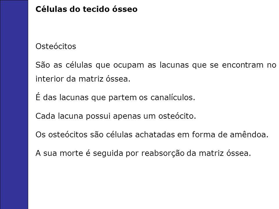 Células do tecido ósseo Osteócitos São as células que ocupam as lacunas que se encontram no interior da matriz óssea. É das lacunas que partem os cana
