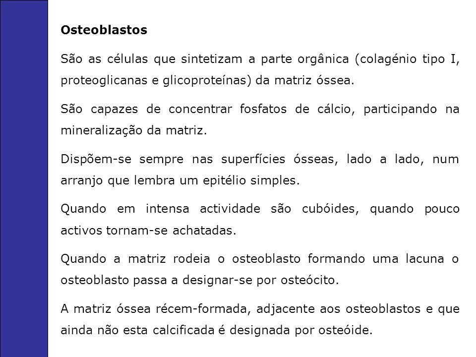 Osteoblastos São as células que sintetizam a parte orgânica (colagénio tipo I, proteoglicanas e glicoproteínas) da matriz óssea. São capazes de concen
