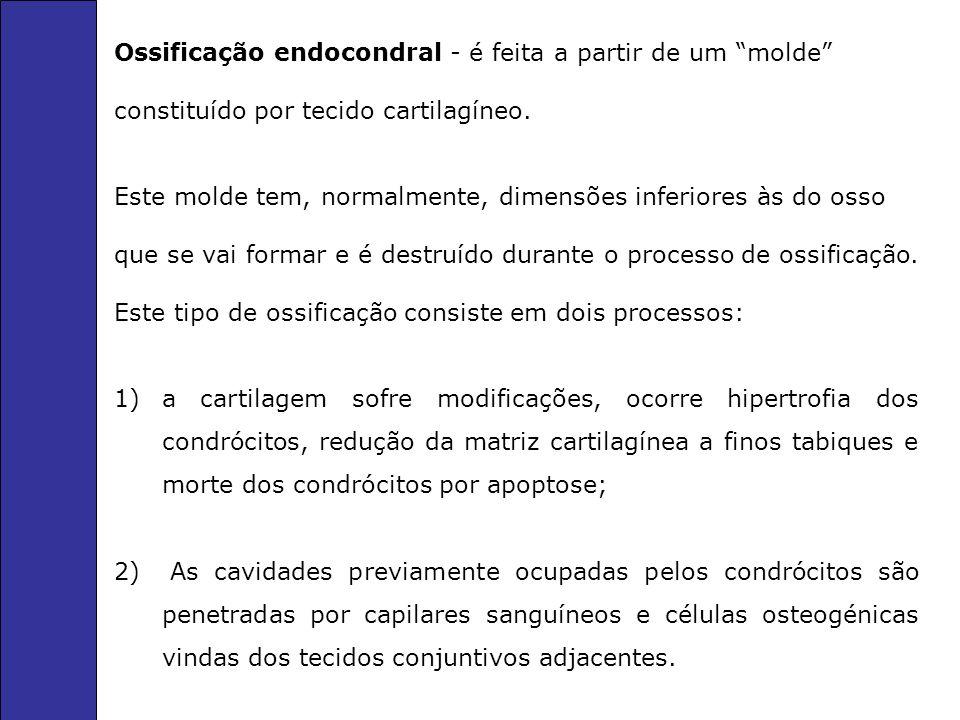 Ossificação endocondral - é feita a partir de um molde constituído por tecido cartilagíneo. Este molde tem, normalmente, dimensões inferiores às do os