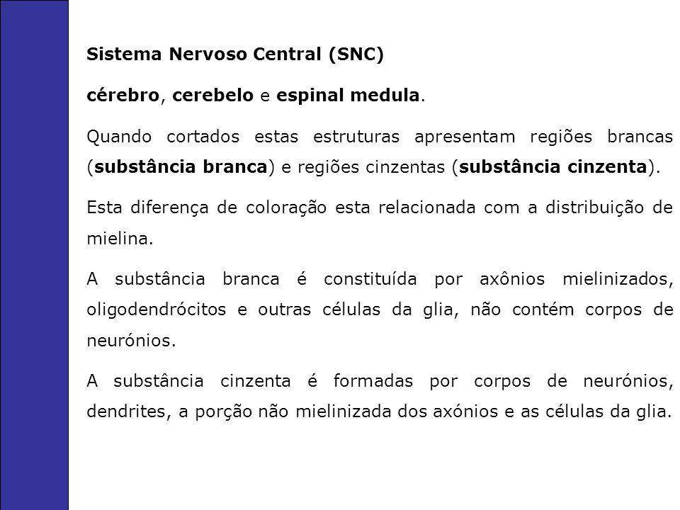Sistema Nervoso Central (SNC) cérebro, cerebelo e espinal medula.