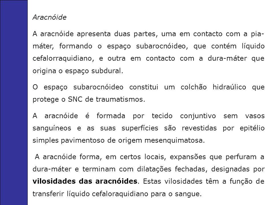 Aracnóide A aracnóide apresenta duas partes, uma em contacto com a pia- máter, formando o espaço subarocnóideo, que contém líquido cefalorraquidiano, e outra em contacto com a dura-máter que origina o espaço subdural.