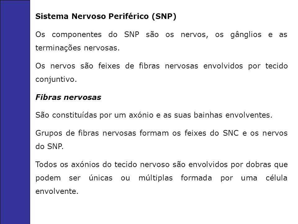 Sistema Nervoso Periférico (SNP) Os componentes do SNP são os nervos, os gânglios e as terminações nervosas.