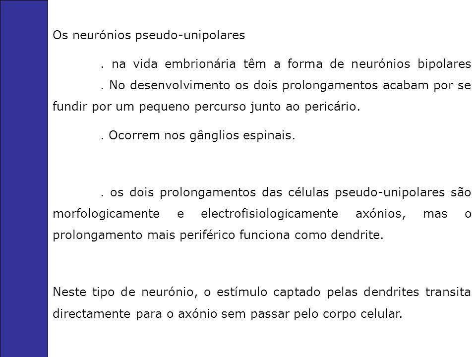 Corpo celular É a parte do neurónio que contém o núcleo e o citoplasma que envolve o núcleo.