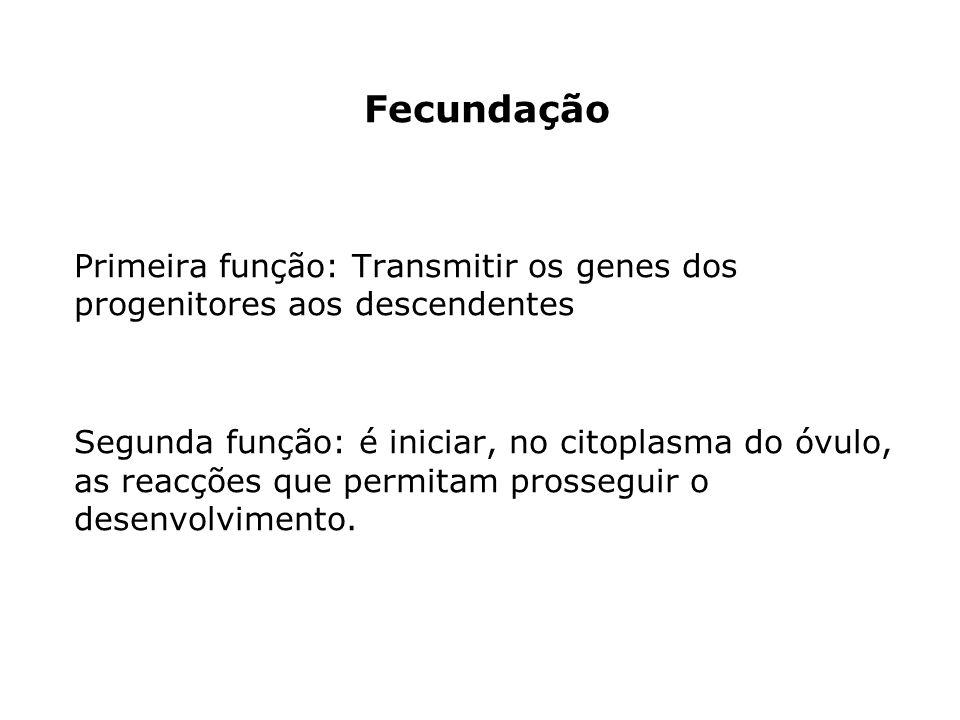 Fecundação Primeira função: Transmitir os genes dos progenitores aos descendentes Segunda função: é iniciar, no citoplasma do óvulo, as reacções que permitam prosseguir o desenvolvimento.