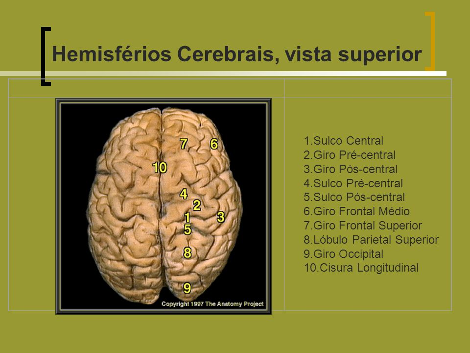 Hemisférios Cerebrais, vista superior 1.Sulco Central 2.Giro Pré-central 3.Giro Pós-central 4.Sulco Pré-central 5.Sulco Pós-central 6.Giro Frontal Méd