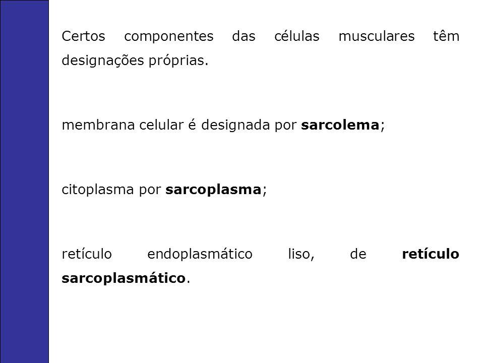 Certos componentes das células musculares têm designações próprias. membrana celular é designada por sarcolema; citoplasma por sarcoplasma; retículo e