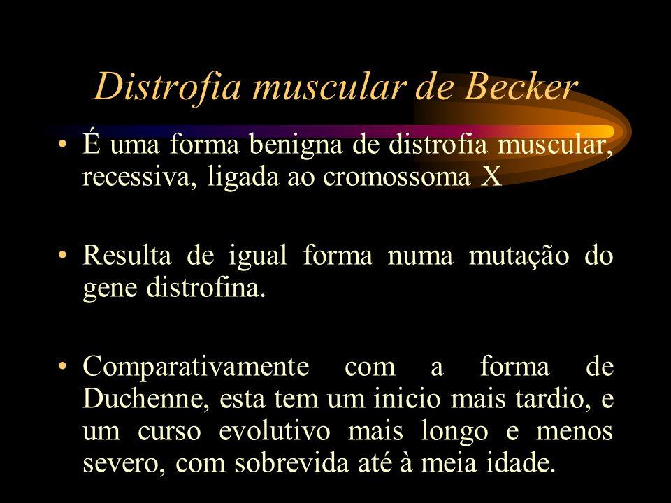 Distrofia muscular de Becker É uma forma benigna de distrofia muscular, recessiva, ligada ao cromossoma X Resulta de igual forma numa mutação do gene