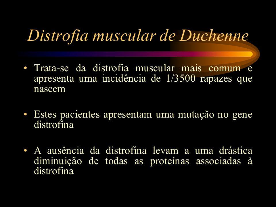 Trata-se da distrofia muscular mais comum e apresenta uma incidência de 1/3500 rapazes que nascem Estes pacientes apresentam uma mutação no gene distr