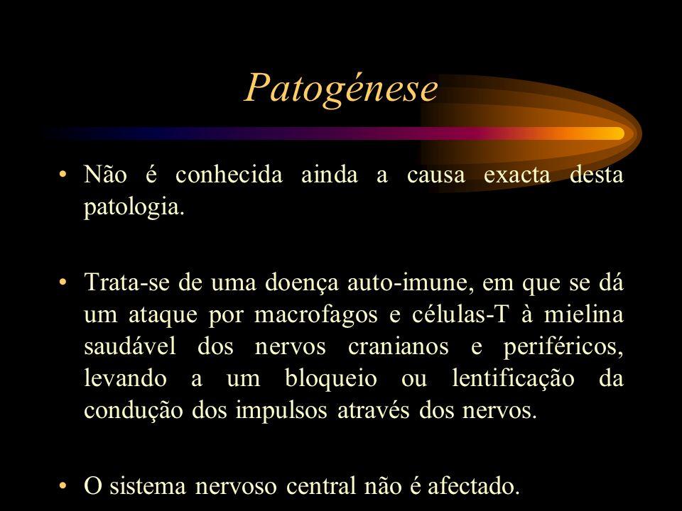 Patogénese Não é conhecida ainda a causa exacta desta patologia. Trata-se de uma doença auto-imune, em que se dá um ataque por macrofagos e células-T