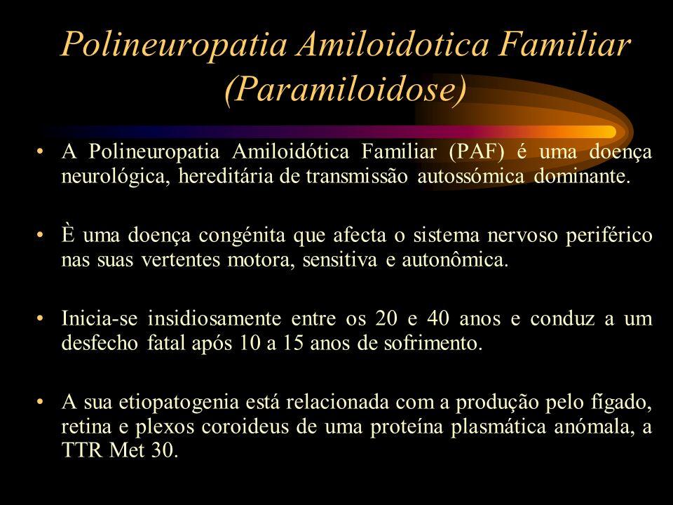 Polineuropatia Amiloidotica Familiar (Paramiloidose) Todas as manifestações da PAF traduzem a degenerescência progressiva dos nervos Todas as fibras nervosas são atingidas e condicionam o quadro clínico da PAF: –- Fibras Sensitivas (Perda progressiva da sensibilidade, primeiro a dor e temperatura, depois táctil, vibratória e articular); –- Fibras Motoras (Atrofia muscular, Abolição dos reflexos tendinosos, Marcha em steppage) –- Fibras Autonômicas (Perturbações oculares, perturbações cardiovasculares, perturbações gastrointestinais, perturbações genito- urinárias), etc.