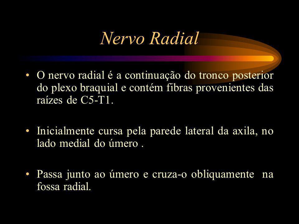 Nervo Radial O nervo radial é a continuação do tronco posterior do plexo braquial e contém fibras provenientes das raízes de C5-T1. Inicialmente cursa