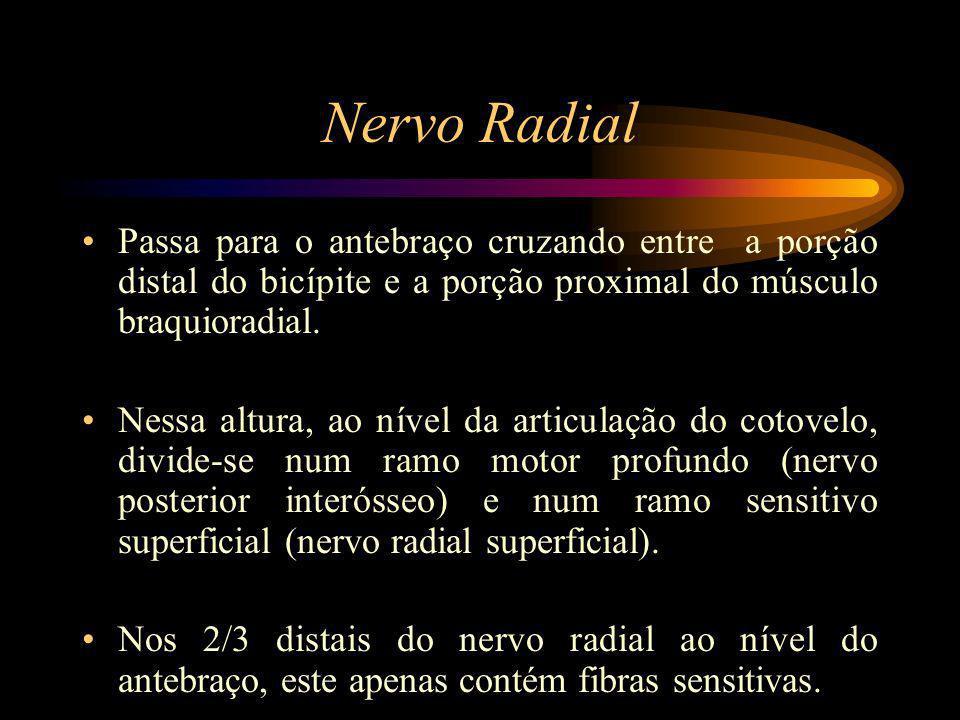 Nervo Radial Passa para o antebraço cruzando entre a porção distal do bicípite e a porção proximal do músculo braquioradial. Nessa altura, ao nível da