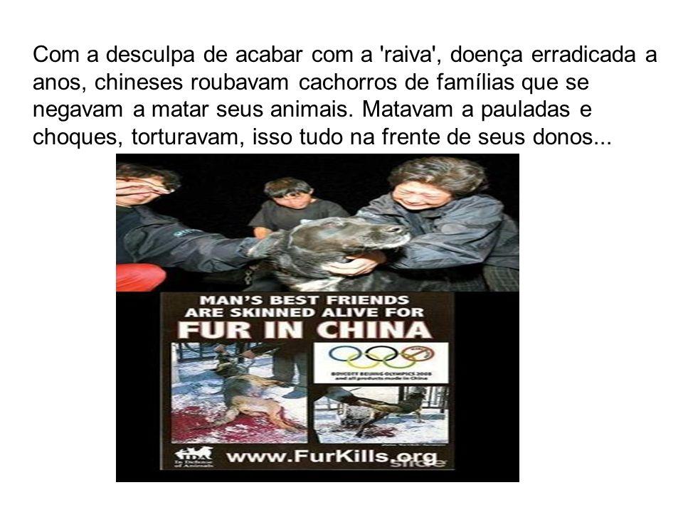 Com a desculpa de acabar com a 'raiva', doença erradicada a anos, chineses roubavam cachorros de famílias que se negavam a matar seus animais. Matavam