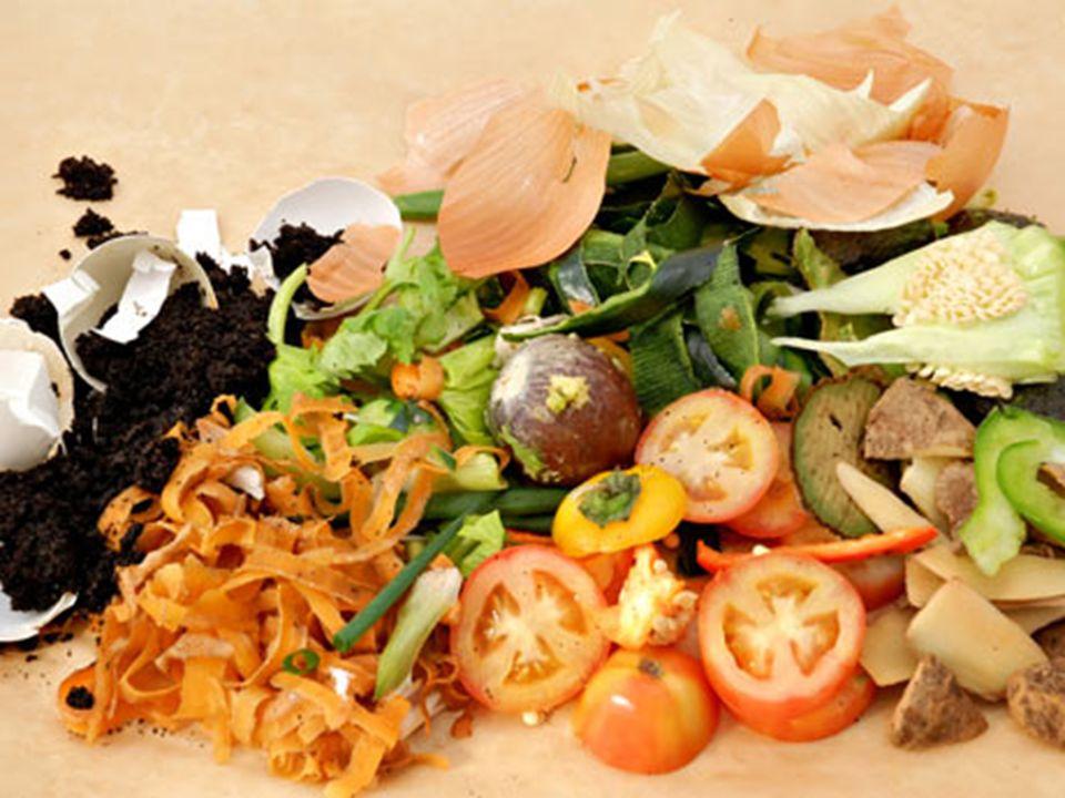 Podemos citar como exemplos de lixo orgânico: restos de alimentos orgânicos (carnes, vegetais, frutos, cascas de ovos), papel, madeira, ossos, sementes, etc.