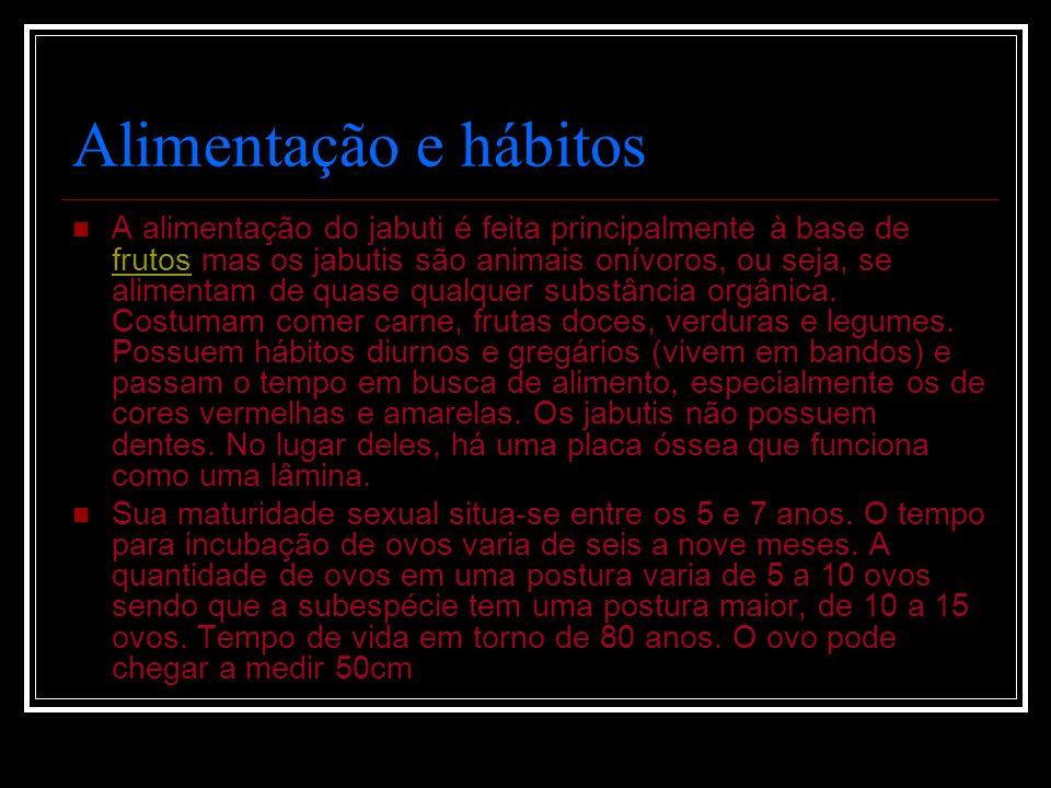 Alimentação e hábitos A alimentação do jabuti é feita principalmente à base de frutos mas os jabutis são animais onívoros, ou seja, se alimentam de qu