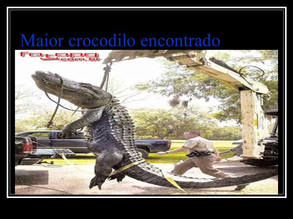Maior crocodilo encontrado