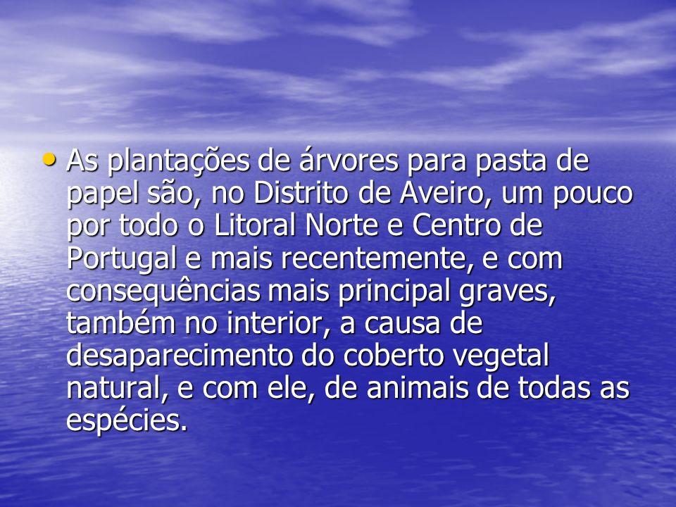 As plantações de árvores para pasta de papel são, no Distrito de Aveiro, um pouco por todo o Litoral Norte e Centro de Portugal e mais recentemente, e