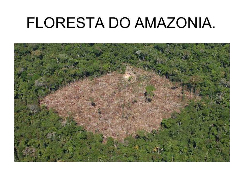 FLORESTA DO AMAZONIA.