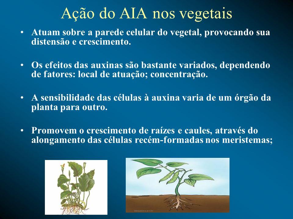 Ação do AIA nos vegetais Atuam sobre a parede celular do vegetal, provocando sua distensão e crescimento. Os efeitos das auxinas são bastante variados