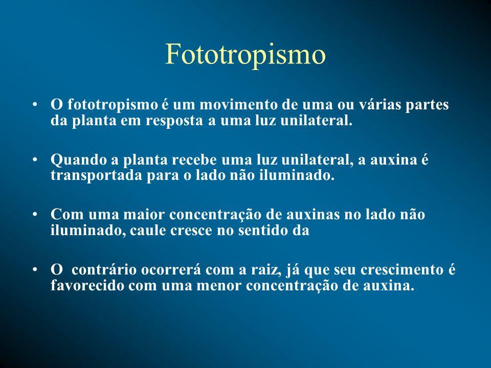 Fototropismo O fototropismo é um movimento de uma ou várias partes da planta em resposta a uma luz unilateral. Quando a planta recebe uma luz unilater