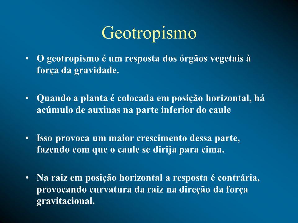 Geotropismo O geotropismo é um resposta dos órgãos vegetais à força da gravidade. Quando a planta é colocada em posição horizontal, há acúmulo de auxi