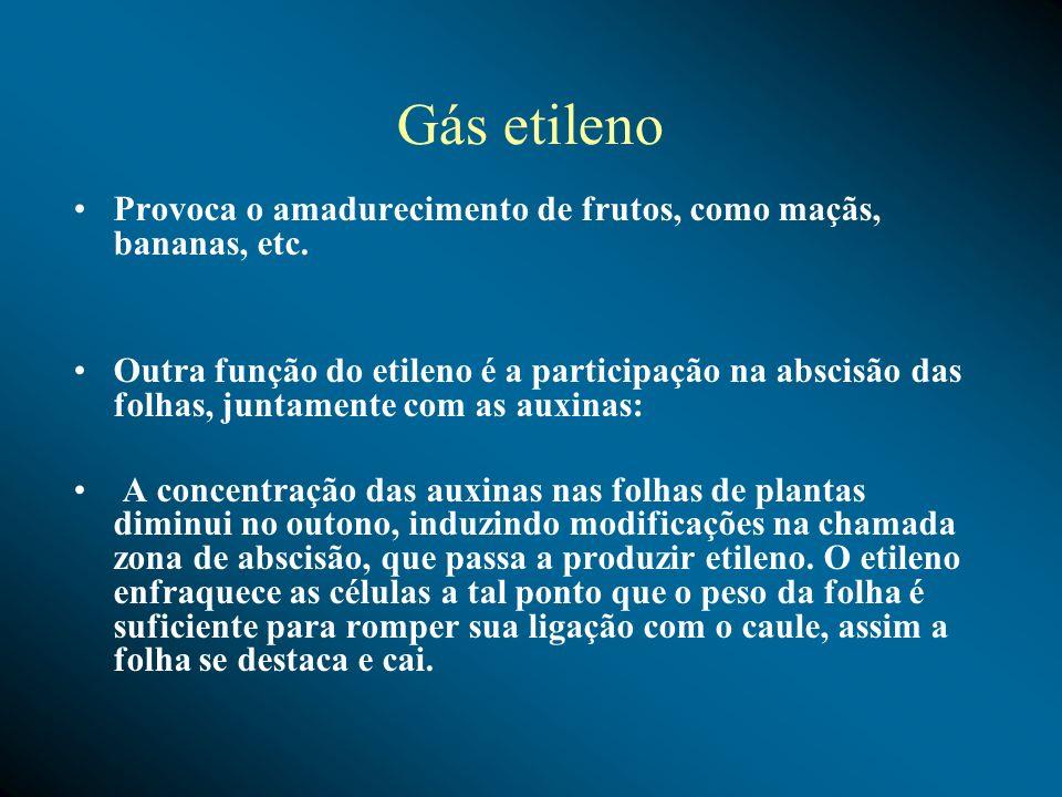 Gás etileno Provoca o amadurecimento de frutos, como maçãs, bananas, etc. Outra função do etileno é a participação na abscisão das folhas, juntamente