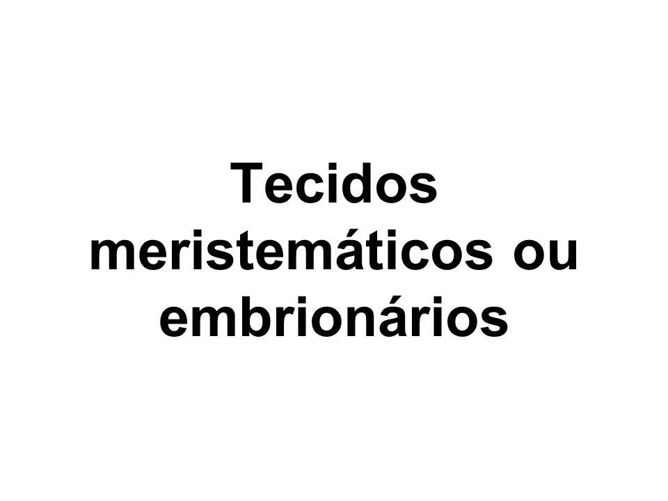 Quais são as características gerais dos tecidos meristemáticos.
