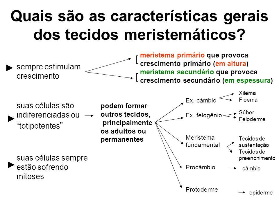 Quais são as características gerais dos tecidos meristemáticos? sempre estimulam crescimento suas células são indiferenciadas ou totipotentes suas cél