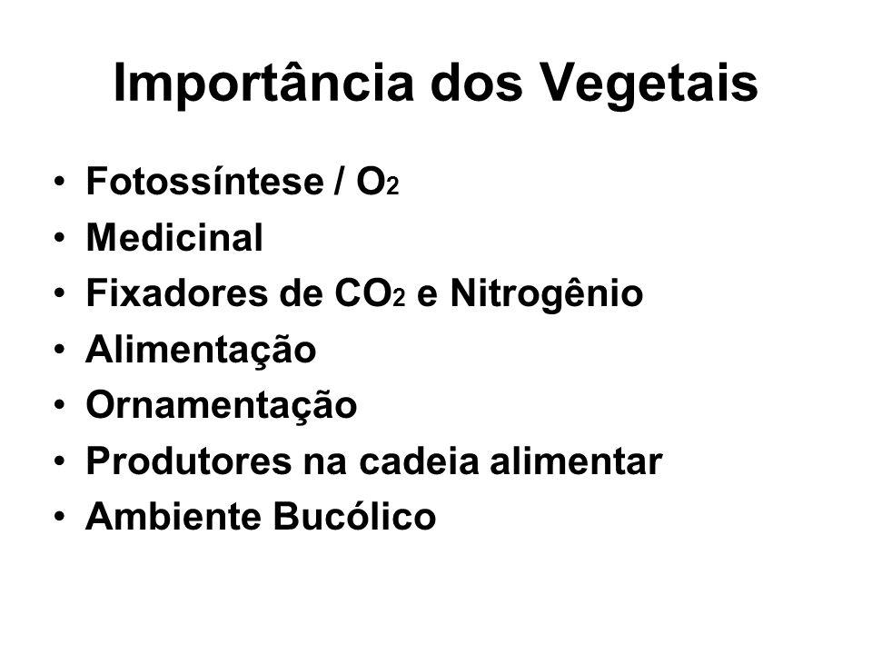 Importância dos Vegetais Fotossíntese / O 2 Medicinal Fixadores de CO 2 e Nitrogênio Alimentação Ornamentação Produtores na cadeia alimentar Ambiente Bucólico