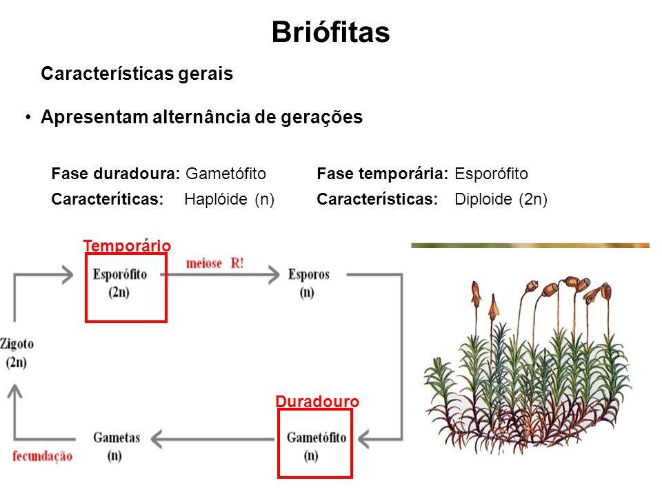 Briófitas Características gerais Apresentam alternância de gerações Fase duradoura: Gametófito Caracteríticas: Haplóide (n) Fase temporária: Esporófito Características: Diploide (2n) Duradouro Temporário