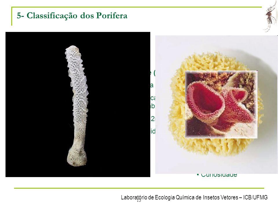 Laboratório de Ecologia Química de Insetos Vetores – ICB/UFMG 13 5- Classificação dos Porifera Filo dividido em 3 classes: Classe Calcárea Marinhas Es