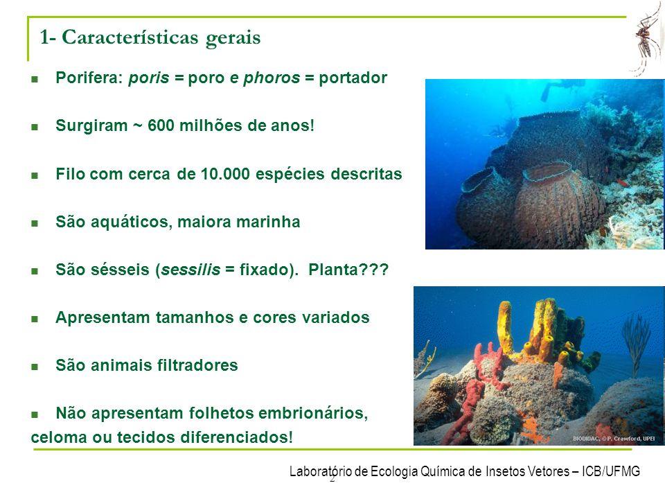 Laboratório de Ecologia Química de Insetos Vetores – ICB/UFMG 2 1- Características gerais Porifera: poris = poro e phoros = portador Surgiram ~ 600 mi