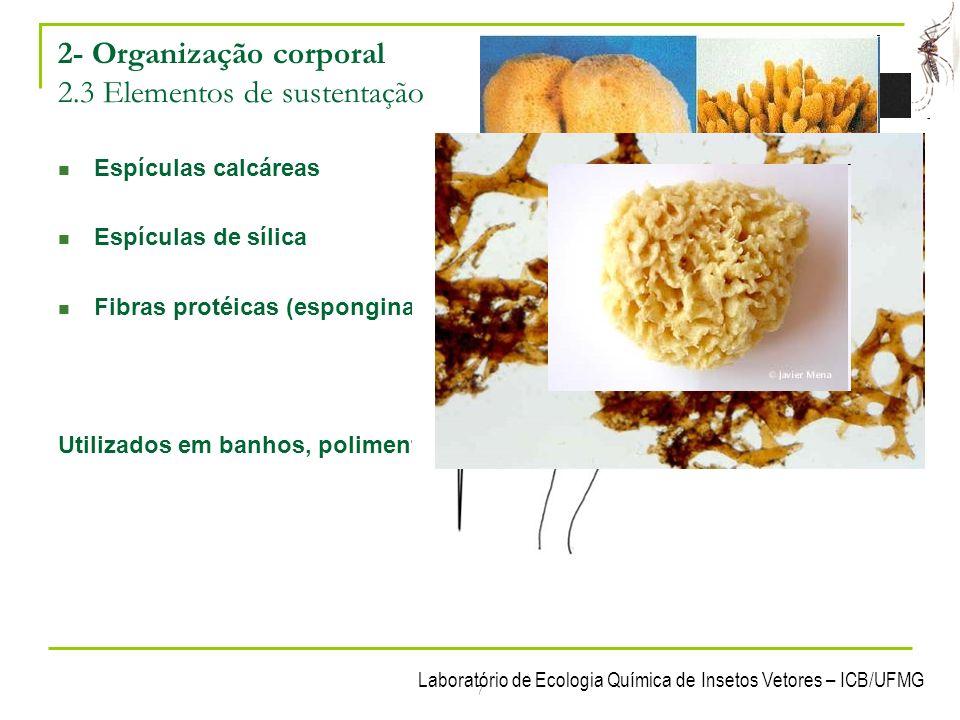 Laboratório de Ecologia Química de Insetos Vetores – ICB/UFMG 7 2- Organização corporal 2.3 Elementos de sustentação Espículas calcáreas Espículas de