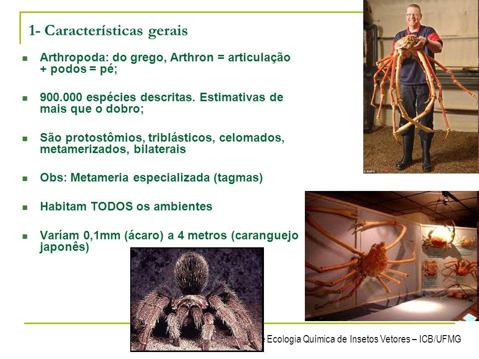 Laboratório de Ecologia Química de Insetos Vetores – ICB/UFMG 13 2- Taxonomia Filo: Arthropoda Subfilos: Trilobita (extinto) - Chelicerata - Mandibulata 1 par de antenas 1 par de mandibulas 1 par de maxilas