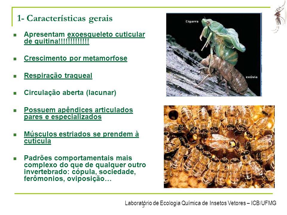 Laboratório de Ecologia Química de Insetos Vetores – ICB/UFMG 34 6- Funcionamento de um inseto Sistema nervoso - Ganglionar ventral - òrgãos de sentido altamente especializados - Percebem cor, sabor, odor, sons, estímulos mecâncicos...