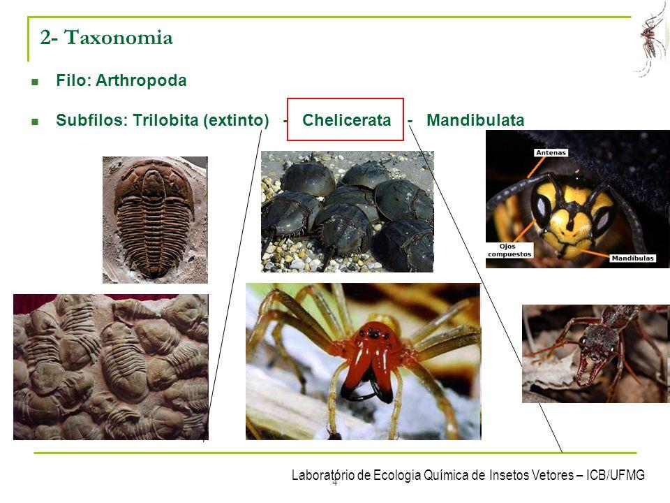 Laboratório de Ecologia Química de Insetos Vetores – ICB/UFMG 25 5- Mandibulata – (Subfilo?) Uniramia Classe Insecta: Principais ordens: - Ordem Phthiraptera – (phthirus=piolho; a=sem; ptera=asas).